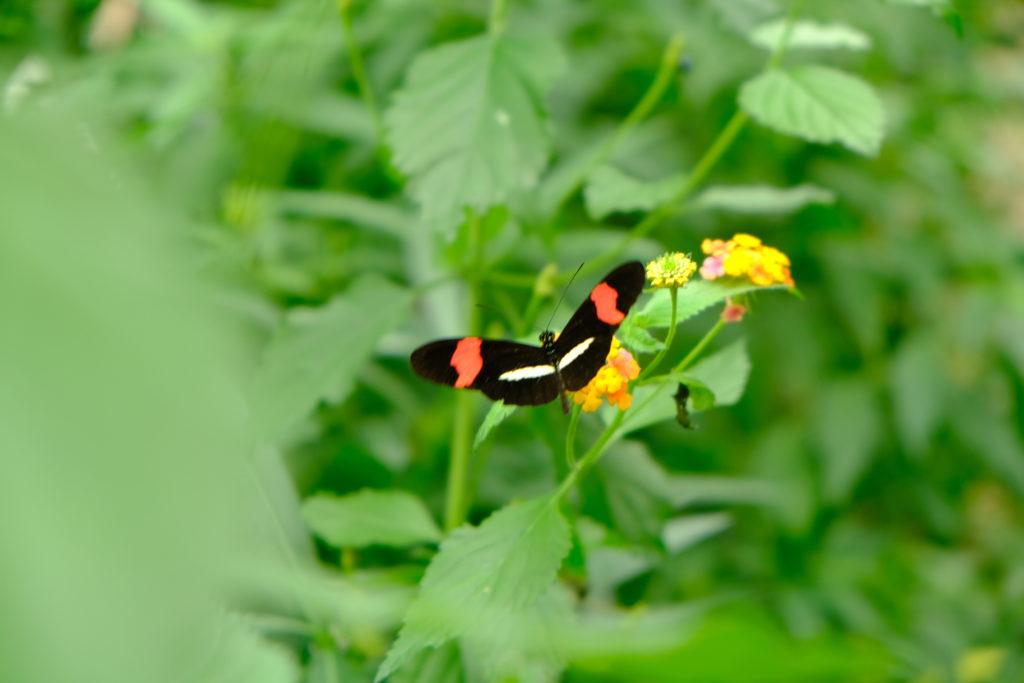 Good Days- Adviesbureau Veiligheid en Handhaving - Botanische tuinen (18)